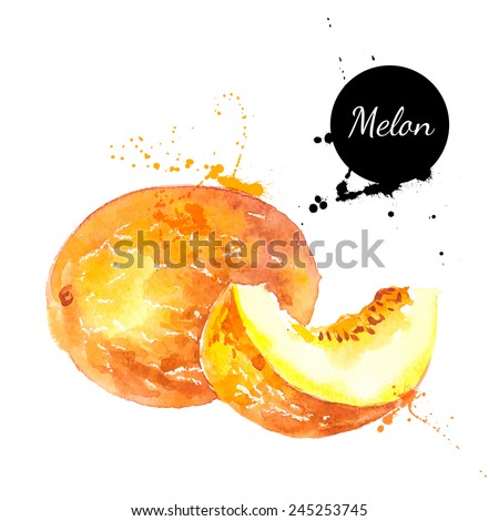 Hand drawn watercolor painting on white background. Vector illustration of fruit melon - stock vector