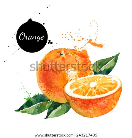 Hand drawn watercolor painting on white background. Vector illustration of fruit orange	 - stock vector