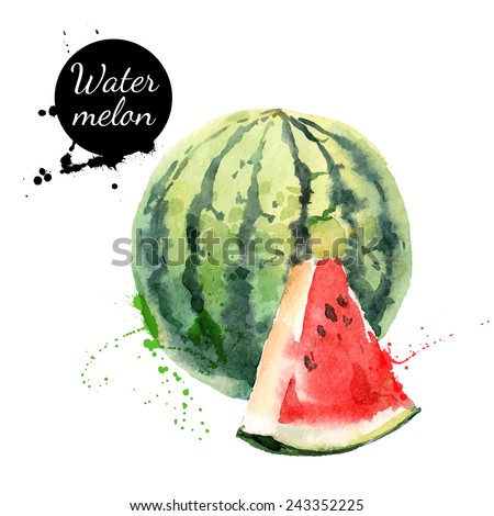 Hand drawn watercolor painting on white background. Vector illustration of fruit watermelon - stock vector