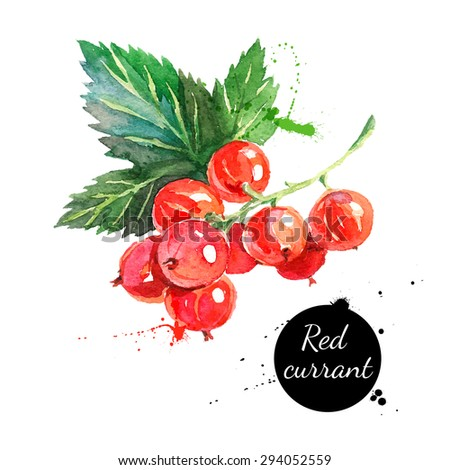 Hand drawn watercolor painting red currants on white background. Vector illustration of berries - stock vector