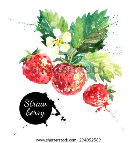 Hand drawn watercolor painting strawberry on white background. Vector illustration of berries	 - stock vector