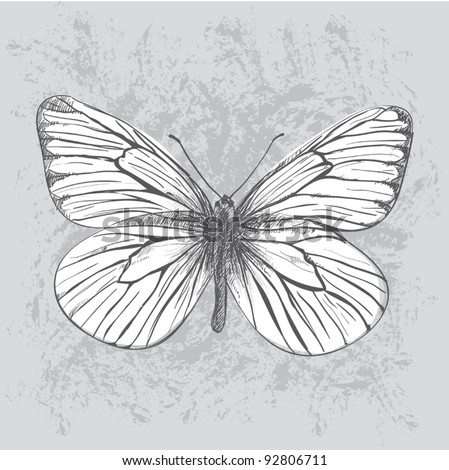 Hand drawn white butterfly - stock vector