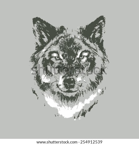 Hand drawn wolf sketch on gray background