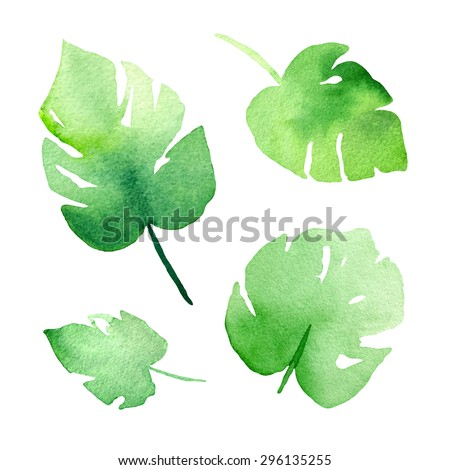 Hand painted abstract watercolor leaves of monstera plant. - stock vector