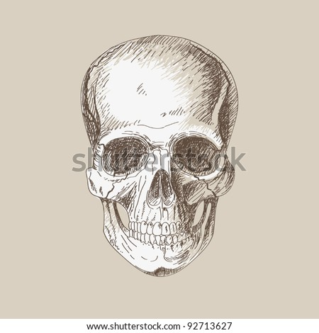 Hand painting of human skull - stock vector