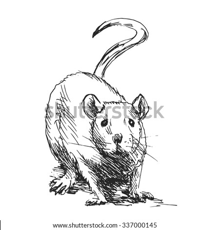 Rats And Mice Stock Images Royalty Free Images Vectors