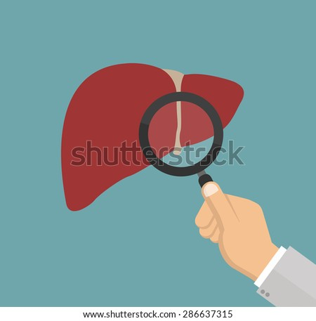 Hand with magnifying glass inspecting liver - medical inspection concept - stock vector