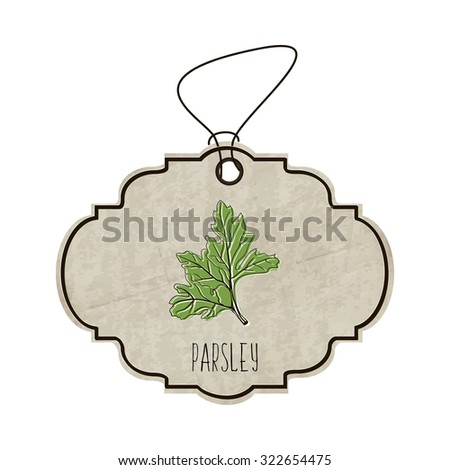 Handdrawn illustration from the collection of spices and herbs. The old label in retro style with colorful fragrant parsley. Vector illustration - stock vector