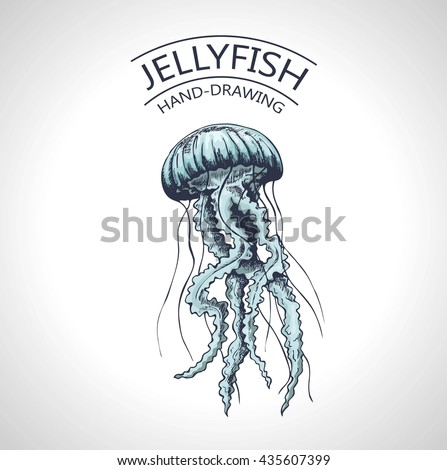 handmade sketch isolated jellyfish marine animals stock vector