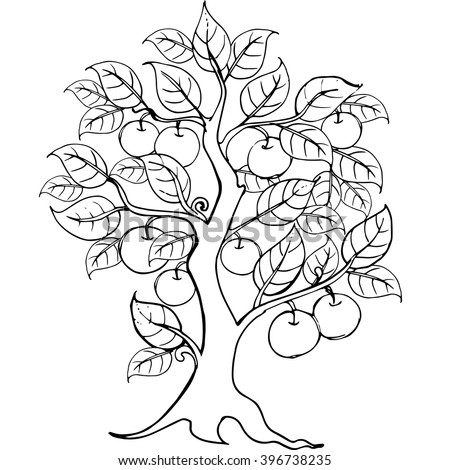 Apple Tree Sketch Stock Images Royalty Free Images Vectors