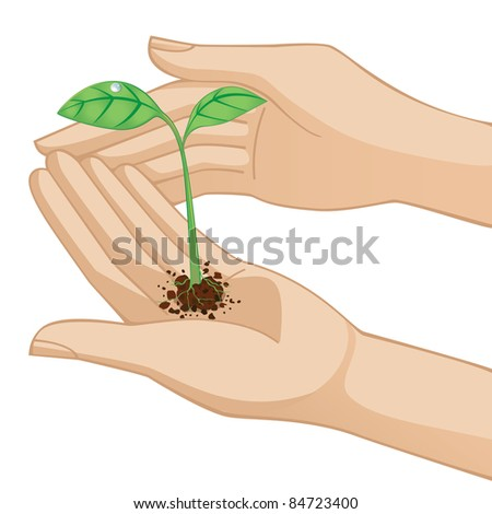 Hands holding new little plant