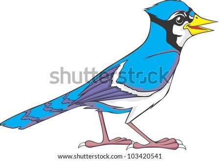 Clip Art Blue Jay Clipart blue jay bird stock photos royalty free images vectors happy illustration