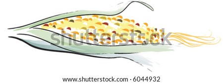 Harvest Corn, Indian Corn - stock vector