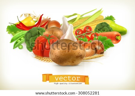 Harvest juicy and ripe vegetables vector illustration, isolated on white - stock vector
