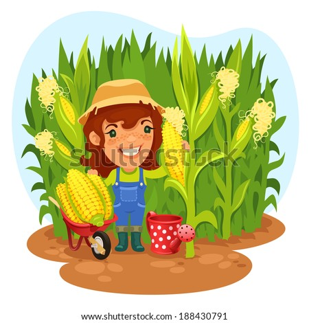 Harvesting Female Farmer In a Cornfield. In the EPS file, each element is grouped separately. - stock vector