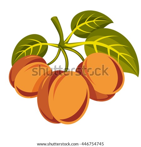 Harvesting symbol, vector fruits isolated. Three ripe organic sweet apricots with green leaves, healthy food idea design icon. - stock vector