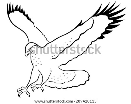 Hawk with wide wings outstretched during the attack, cartoon vector outline