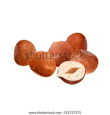hazelnut. filbert. cobnut. nut. vector illustration. leaves.delicious healthy vegan snack.