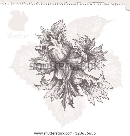 hazelnut with leaves, detailed drawing,vector illustration - stock vector