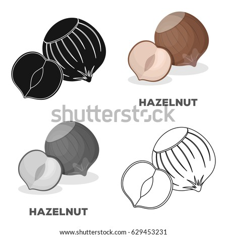 Hazelnuts in shell.Different kinds of nuts single icon in cartoon style vector symbol stock illustration.