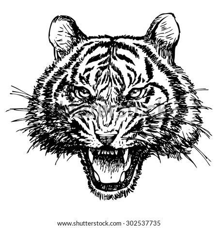 head of angry tiger hand drawn on white background - stock vector