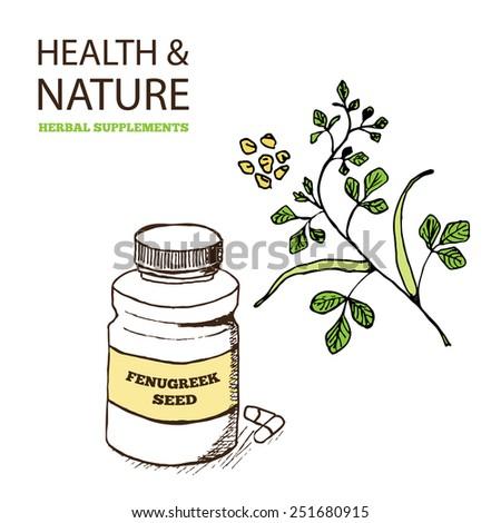 Health and Nature Supplements Collection. Fenugreek  - Trigonella foenum-graecum - stock vector