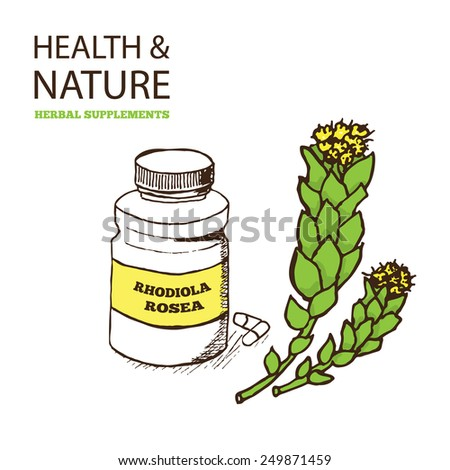 Health and Nature Supplements Collection. Rhodiola Rosea -  golden root - stock vector