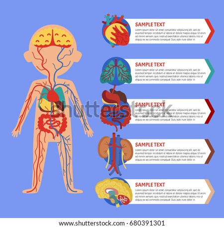 Health Medical Poster Human Body Anatomy Stock Vector 680391301 ...