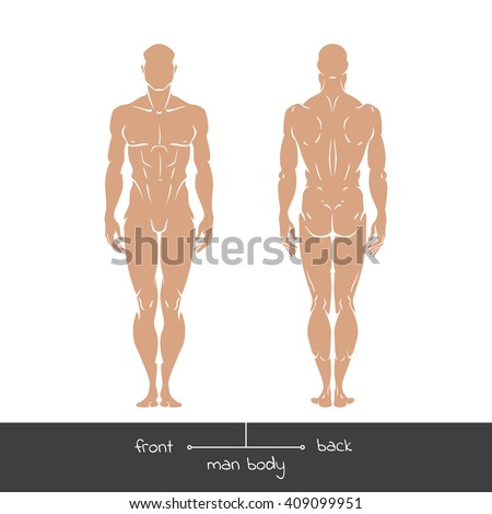 muscular young man front back view stock vector 407795194, Muscles