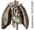 """Heart and lung - vintage engraved illustration - """"Manuel des hospitalière et des garde-malaldes""""  edited by  Librairie Poussielgue - Paris 1907 - stock vector"""