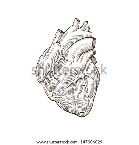 Heart hand drawn isolated on a white backgrounds - stock vector