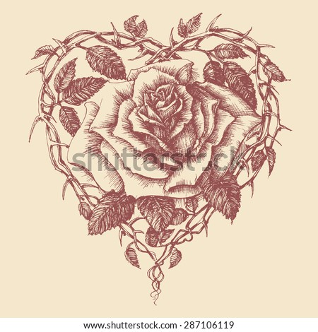 Heart rose vector illustration - stock vector