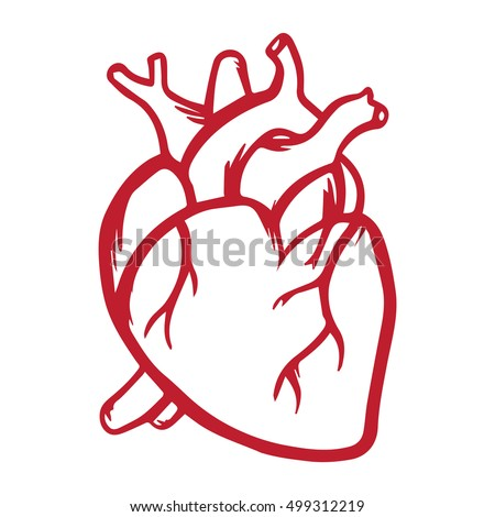 Anatomical Heart Drawing Stock Images, Royalty-Free Images ...