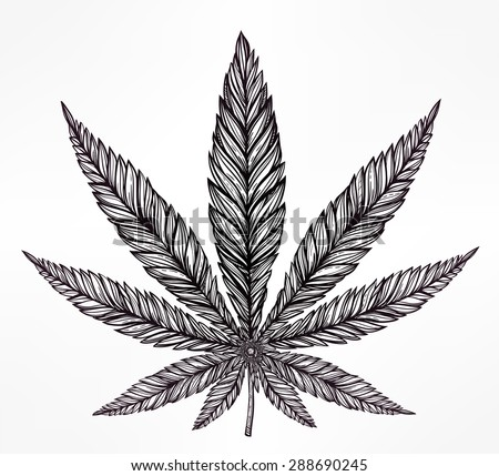 Hemp Cannabis Leaf in vintage linear style. Marijuana silhouette clip art. Concept design, Elegant tattoo artwork. Isolated vector illustration.  - stock vector