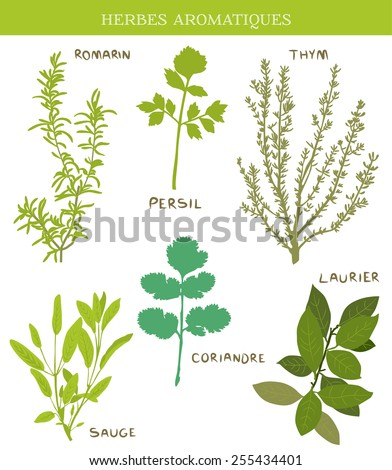 Herbes Aromatiques ( fresh herbs) thym (thyme), laurier (bay leaves), sauge (sage), persil (parsley), coriandre(coriander), romarin (rosemary) - stock vector