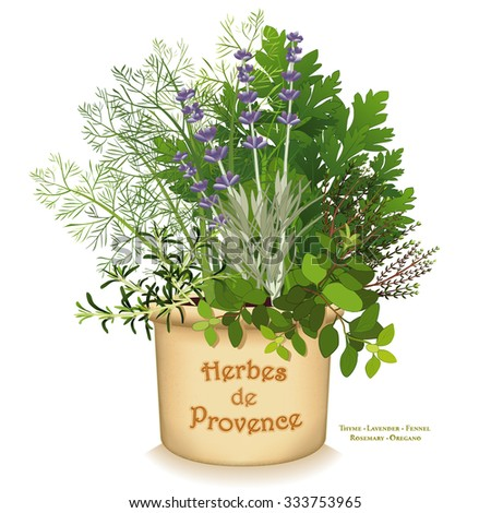 Herbes de Provence Garden Planter, aromatic cooking herbs of SW  France, Rosemary, Sweet Fennel, Flat Leaf Parsley, Thyme, Oregano, Lavender in clay flowerpot isolated on white.  EPS8 compatible.   - stock vector