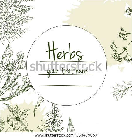 Herbs And Flowers Painted Green Line Space For Text Vector Drawing Template With