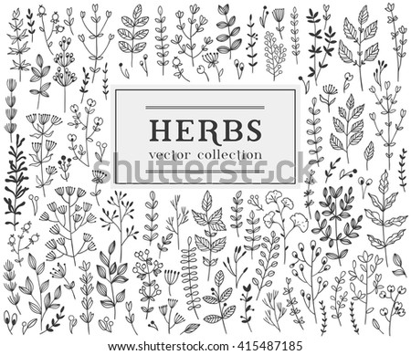 Herbs and twigs set for your design. Vector illustration. - stock vector