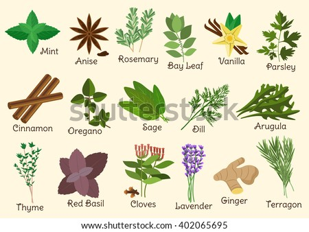 Herbs, condiment and spices with parsley, mint and rosemary, red basil, dill, anise star, thyme, cloves, oregano, cinnamon and ginger, bay leaf and vanilla, sage and arugula, tarragon and lavender