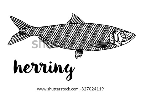 herring coloring pages - photo#17
