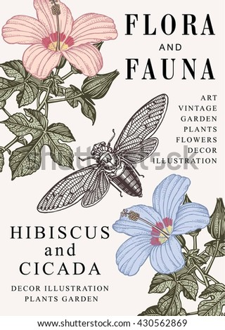 Hibiscus, Cicada, mallow. Beautiful garden baroque blooming realistic flowers. Frame, greeting invitation card, label. Drawing engraving isolated. Flora, fauna. Vintage vector victorian illustration. - stock vector