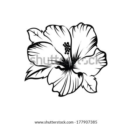 Hibiscus Flower - stock vector
