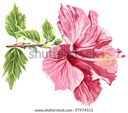 Hibiscus flower - vector / eps10 - stock vector