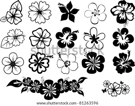 hibiscuses - stock vector