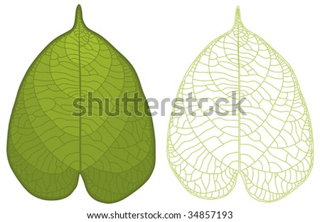 Highly detailed isolated green leaf and leaf vein