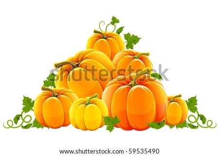 hill harvest of orange ripe pumpkins - stock vector