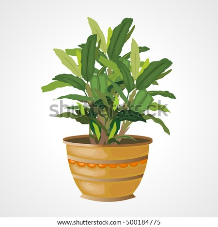 home plant