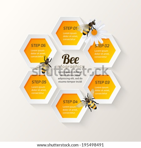Honey bee on daisy and comb background hexagon steps infographic vector illustration - stock vector