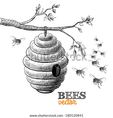 Honey bees and hive on tree branch isolated vector illustration - stock vector