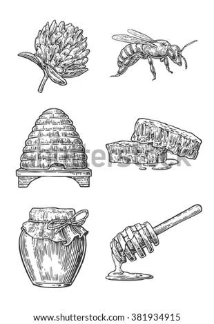 Jars Bee Hive Clover Honeycomb Vector Vintage Engraving